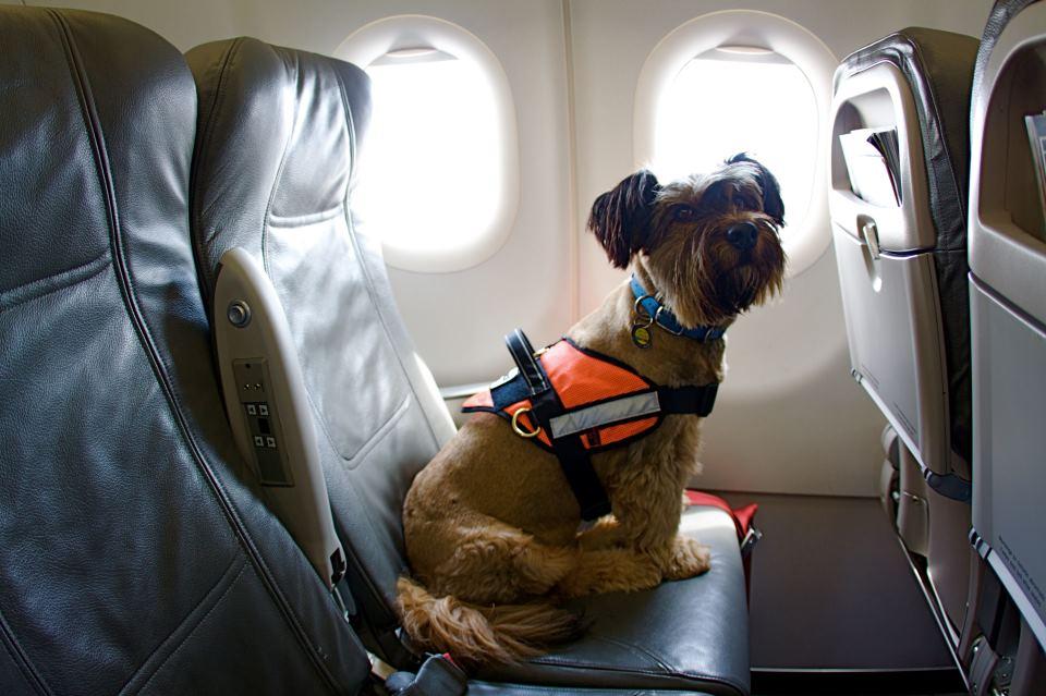 Lo que debes saber si viajas en avión con tu perro – Viaje Tip